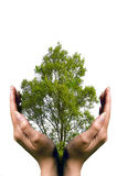 Hands protecting a tree Royalty Free Stock Image