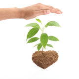 Hands protecting young plant Stock Photos
