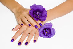 Hands with purple manicure and flowers Stock Photos