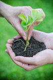 Hands putting flower into soil Royalty Free Stock Photos