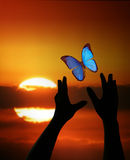 Hands reaching for Butterly. Hands Reaching for Butterfly in The Sky royalty free stock image