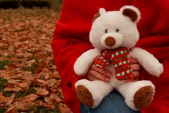 Hands in red carpet holding white cute teddy bear with scarf in autumn park with fallen leaves. Holiday fluffy toy gift. Autumn background Stock Photo