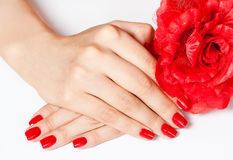 Hands with red flower Royalty Free Stock Photography
