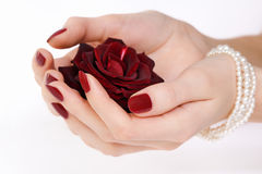 Hands with red manicure and rose Royalty Free Stock Image