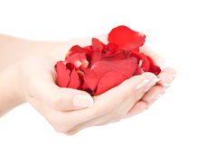 Hands With Red Rose Petals Royalty Free Stock Photo