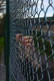 Hands of a refugee woman on a wire fence. A girl imprisoned and deprived of freedom Royalty Free Stock Photo