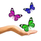 Hands releasing butterflies Royalty Free Stock Photo