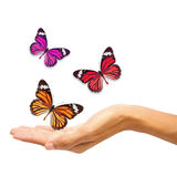 Hands releasing butterflies Royalty Free Stock Photography