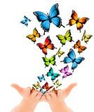 Hands releasing butterflies. Stock Photos