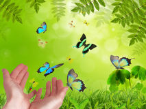 Hands releasing exotic butterflies. Royalty Free Stock Photography