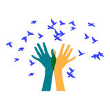 Hands releasing a flock of birds. Colored vector illustration depicting hands, letting out a flock of Royalty Free Stock Photography