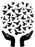 Hands releasing peace pigeon. The peace symbol of hands releasing peace pigeon Stock Images