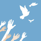 Hands releasing white dove. Hands releasing white dove on blue background Stock Images