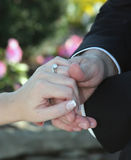 Hands and Rings. Detail of groom holding bride's hand showing wedding rings in formal attire Royalty Free Stock Photo