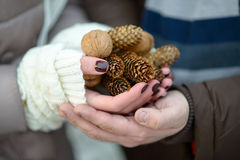 Hands of the romantic couple. Pine cones in the hands of the romantic couple Stock Photos