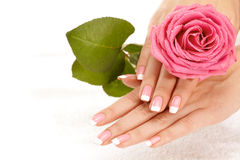 Hands with a rose Royalty Free Stock Images