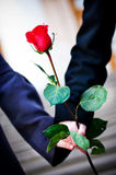 Hands with rose Stock Photo