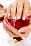 Hands with rose petals Royalty Free Stock Image