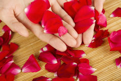 Hands on rose petals Stock Photography