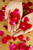 Hands on rose petals Stock Photo