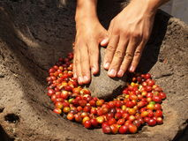 Hands rubing coffee beans Stock Image