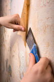 Hands scraping off old wallpaper with spatula Stock Images
