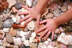 Hands on seashell and stones Royalty Free Stock Photography