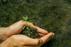 Hands seedling the soil royalty free stock photo