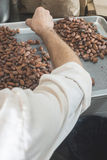 Hands sellect cocoa beans Royalty Free Stock Photo
