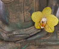 Hands of a Serene Buddha. With a yellow Orchid flower Royalty Free Stock Image