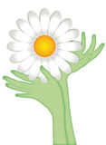 Hands in the shape of flower. Two hands reaching toward the flower of a daisy will become the stem that holds it up. Vector illustration on white background Stock Image