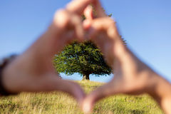 Hands in shape of heart with a green tree on the background Royalty Free Stock Photography