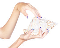 Hands with shell Royalty Free Stock Images