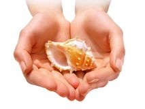 Hands with shell stock images