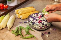 Hands shelling fresh colorful beans Stock Images