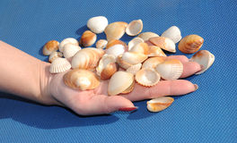 Hands with shells on blue background 2. Hands with shells on blue background Royalty Free Stock Photography