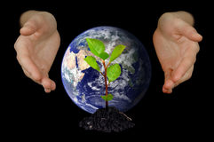 Hands shielding young tree and Earth. Hands protecting a young growing little tree and globe of planet Earth on black background Stock Photos