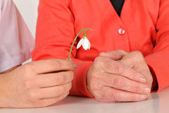 Hands and snowdrop Stock Photo