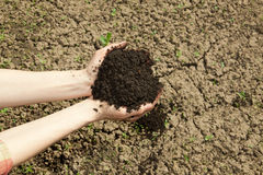 Hands with soil Royalty Free Stock Photos