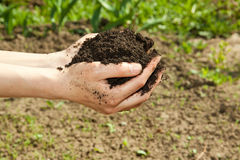 Hands with soil Royalty Free Stock Photo