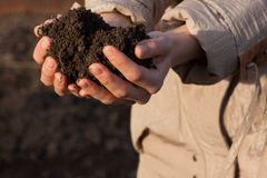 Hands with soil Stock Images