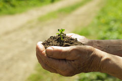 Hands with soil and plant Stock Image