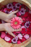 Hands spa with flowers for young lady Royalty Free Stock Photography