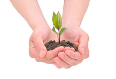Hands and sprout Stock Images