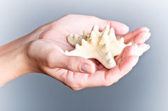 Hands and starfish Royalty Free Stock Photos
