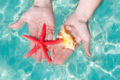 Hands starfish and seashell in tropical water Royalty Free Stock Photography