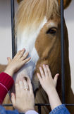 Hands stroke horse Royalty Free Stock Photos