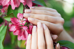 Hands with a stunning manicure on flowers Stock Photos