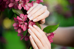 Hands with a stunning manicure on flowers Stock Photo