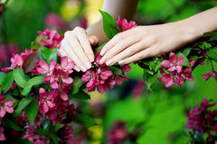 Hands with a stunning manicure on flowers Stock Photography